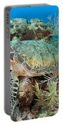 Green Sea Turtle On Caribbean Reef Portable Battery Charger