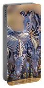 Grevy Zebra Party  7528 Portable Battery Charger