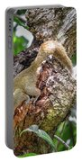 Grey Bellied Squirrel Portable Battery Charger