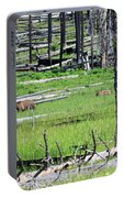 Grizzly Bear And Cub Cross An Area Of Regenerating Forest Fire Portable Battery Charger