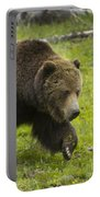 Grizzly Bear Boar-signed-#8517 Portable Battery Charger