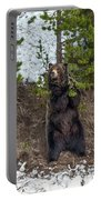 Grizzly Shaking A Tree Portable Battery Charger