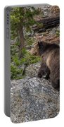 Grizzly Sow In Yellowstone Park Portable Battery Charger