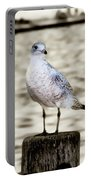 Gull Portable Battery Charger