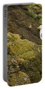 Gull On Cliff Edge Portable Battery Charger