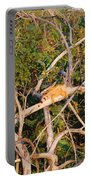 Hanging Iguana Portable Battery Charger