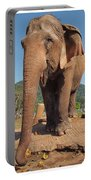 Happy Thai Elephant In Chiang Mai Portable Battery Charger