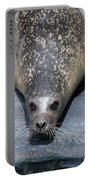 Harbor Seal Ready To Plunge Into The Water Portable Battery Charger