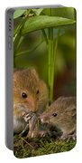 Harvest Mice Eating Grasshopper Portable Battery Charger