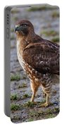 Hawk On A Walk Portable Battery Charger