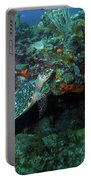 Hawksbill Sea Turtle 4 Portable Battery Charger