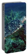 Hawksbill Sea Turtle 7 Portable Battery Charger