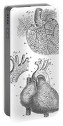 Heart Anatomy, Illustration, 1703 Portable Battery Charger