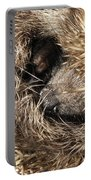 Hedgehog Curled Up Portable Battery Charger