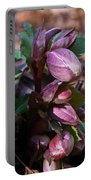 Heliborus Early Flower Buds 1 Portable Battery Charger