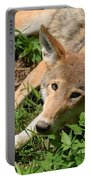 Hello Wolf Portable Battery Charger