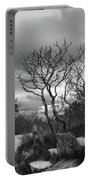 Hermit Island Tree 0192 Portable Battery Charger