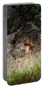 Hiding Behind A Twig Portable Battery Charger