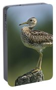 Hieroglyphic Sandpiper... Portable Battery Charger