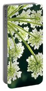 Himalayan Hogweed Cowparsnip Portable Battery Charger