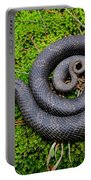 Hognose Spiral Portable Battery Charger