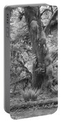Hoh Rain Forest 3381 Portable Battery Charger