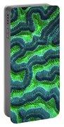 Honduran Brain Coral Portable Battery Charger