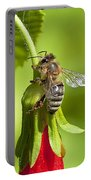 Honey Bee 11 Portable Battery Charger