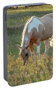 Horse Feeding In Grass Farm With Sunset Light From The Left Portable Battery Charger