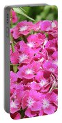 Hot Pink Sweet William Flowers In A Garden Blooming Portable Battery Charger
