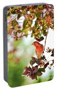 House Finch Hanging Around Portable Battery Charger