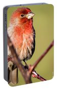 House Finch In Full Color Portable Battery Charger