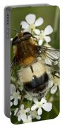 Hoverfly Leucozona Lucorum Portable Battery Charger