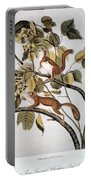 Hudsons Bay Squirrel Portable Battery Charger