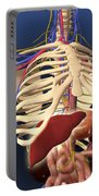 Human Skeleton Showing Digestive System Portable Battery Charger