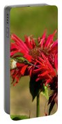 Hummer In The Bee Balm Portable Battery Charger