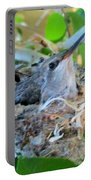 Hummingbird In Nest 1 Portable Battery Charger