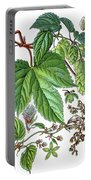 Humulus Lupulus, Common Hop Or Hop Portable Battery Charger