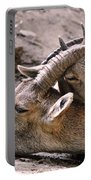Ibex Mother And Son Portable Battery Charger