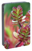 California Red Tip Crassula Ovata Jade Plant Portable Battery Charger