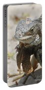 Iguana On A White Sand Beach Up Close Portable Battery Charger