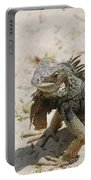 Iguana Sitting On A Sandy Beach In Aruba Portable Battery Charger