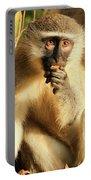 Illuminated Vervet Monkey  Portable Battery Charger