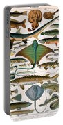 Illustration Of Ocean Fish Portable Battery Charger
