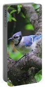 I'm Looking - Blue Jay Portable Battery Charger