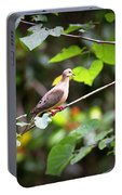 Img_0534-001 - Mourning Dove Portable Battery Charger