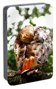 Img_1049-006 - Red-tailed Hawk Portable Battery Charger