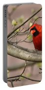 Img_1180-001 - Northern Cardinal Portable Battery Charger