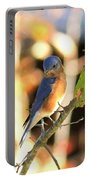 Img_145-005 - Eastern Bluebird Portable Battery Charger