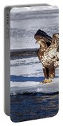 Immature Eagle On Ice Portable Battery Charger
